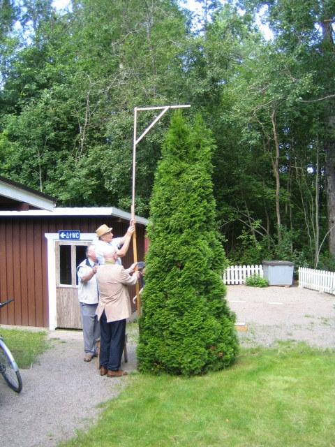 Ystävyyden puun mittaus